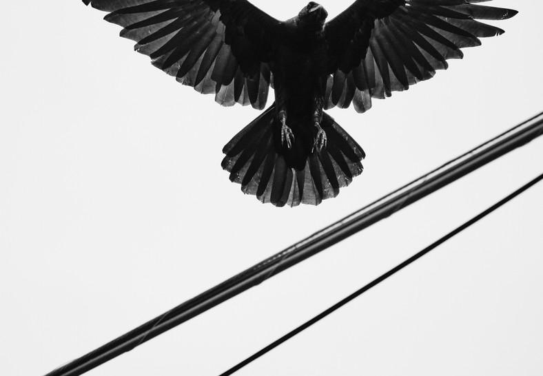 09 19 Cloudy Day Birds DSCF8021.jpg