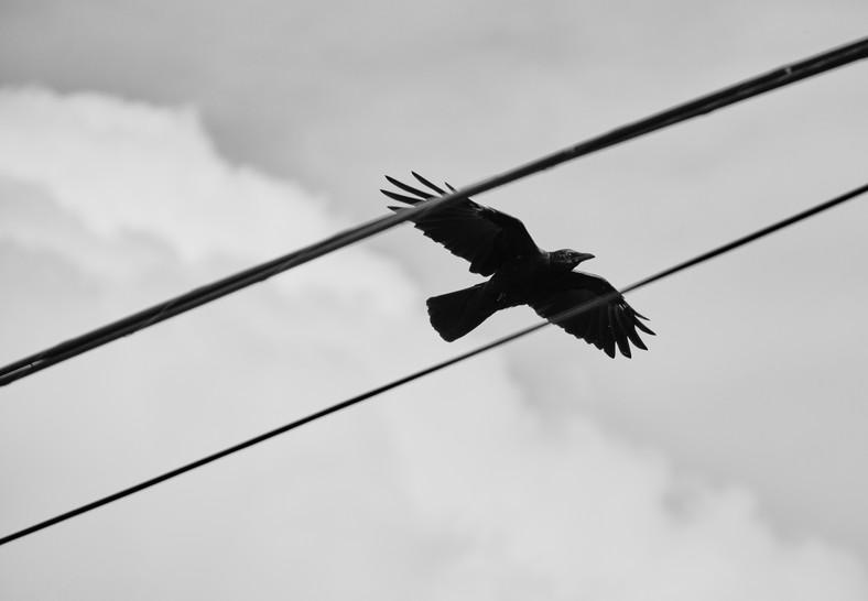 09 27 Afternoon Birds DSCF8851.jpg