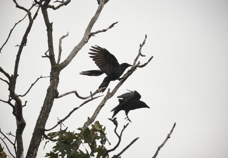09 19 Cloudy Day Birds DSCF7996.jpg
