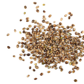 Is Hemp Seed Oil Right For You?