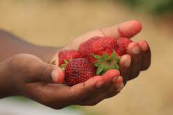Strawberry Hands
