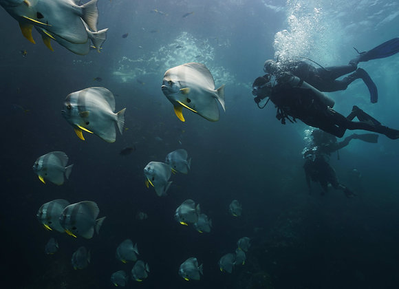 Fun Diving (Have diving license)