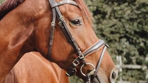 Die Reiterlive Trense in braun 🤎
