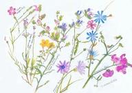F02 les fleurs sauvages d'été