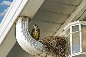 Tips and tricks to discourage pest bird infestations