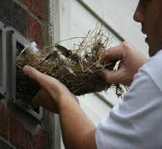 Discourage birds from making their home at your house
