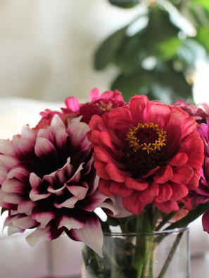 Pink Flowers Compliment Houseplants