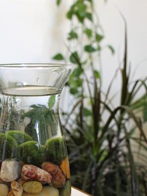 Keep Moss Balls As A Houseplant