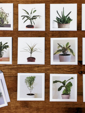 Print Houseplant Note Cards For Gifts