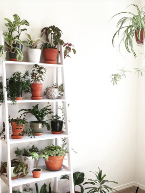 Match Plants With Thrift Store Pots