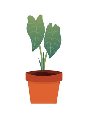 Make A Houseplant Thaumatrope