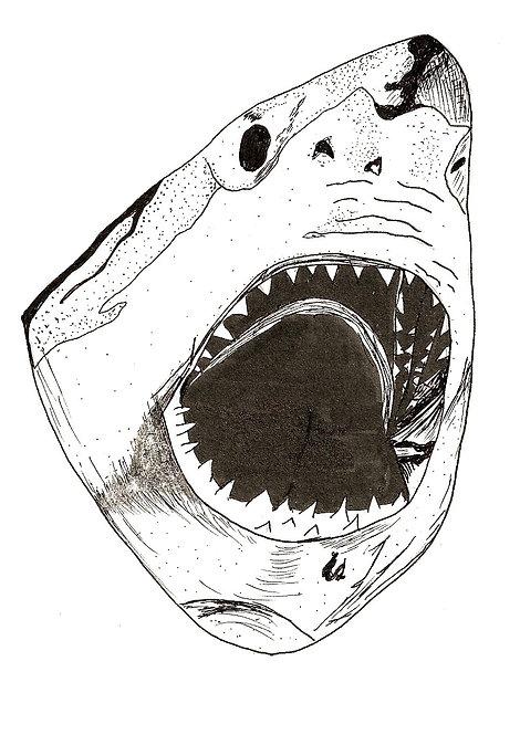 """""""Shark"""" - A5 Print"""