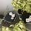 Thumbnail: Black floral LILAH's