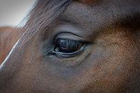 horse-1421530_1280.jpg