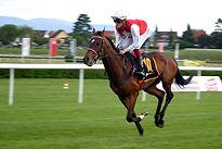 horse-racing-2714849__480.jpg
