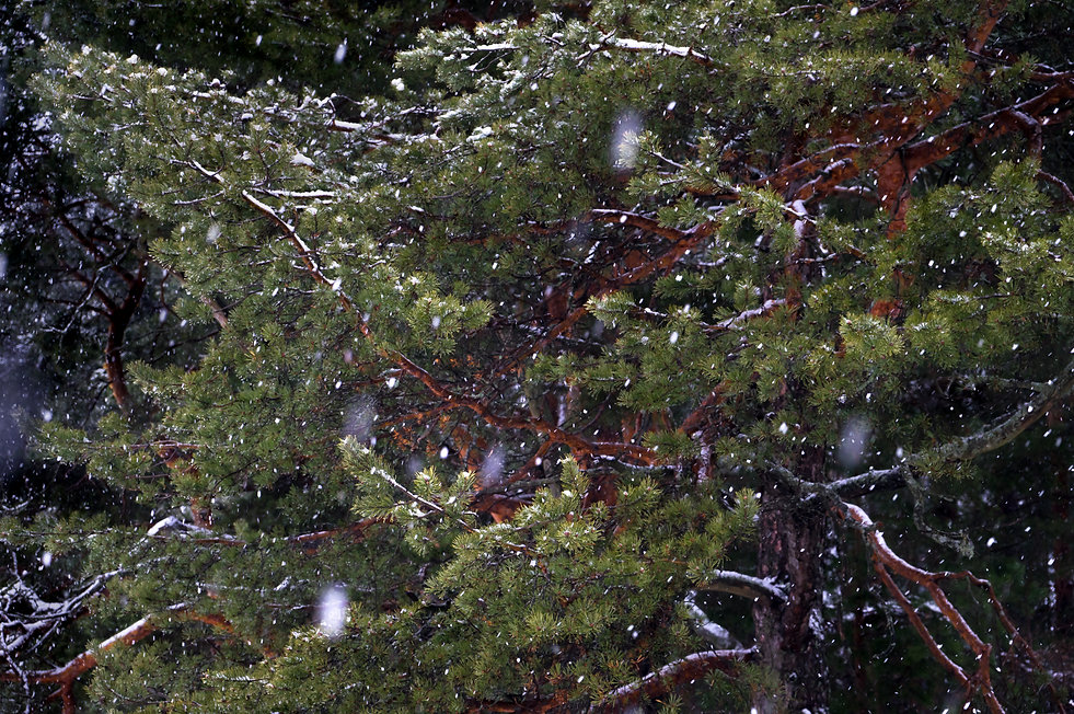 wintertime 2 (1 of 1).jpg