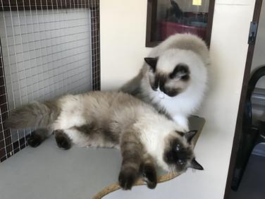 kitty+1.jpg