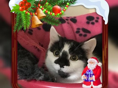kitty+5.jpg