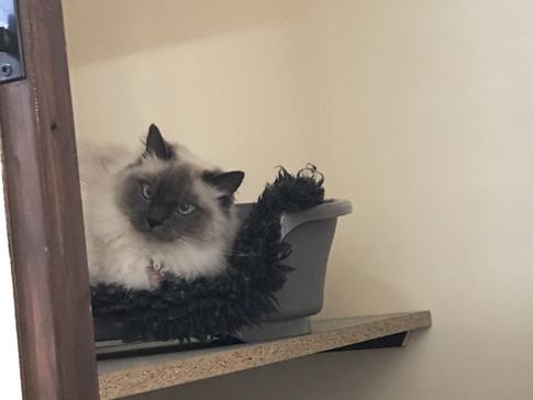 kitty+6.jpg