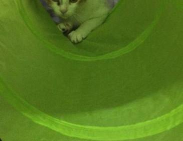 kitty21.jpg