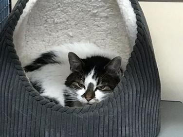 kitty12.jpg