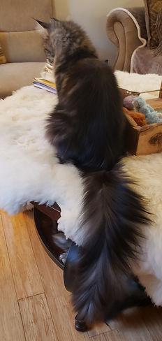 Bianca tail.jpg