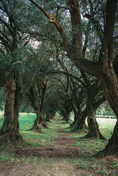 Paseo de los Olivos, Pazo de Santa Cruz de Rivadulla