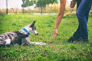 Canva - Woman is training her dog to lie