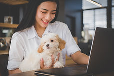 Canva - woman holding adorable dog at ca