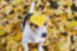 Canva - Dog with Leaf on its Head.jpg