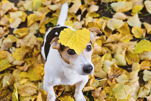Canva - Dog with Leaf on its Head.jpg