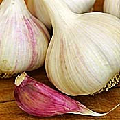 Garlic; A Therapeutic Superstar