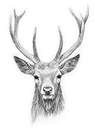 Copy of Stags head for LDH website on Wi