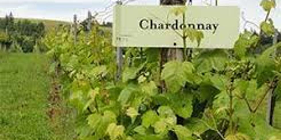 Chardonnay: Champagne vs. Napa