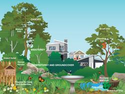 Backyard habitat illustration