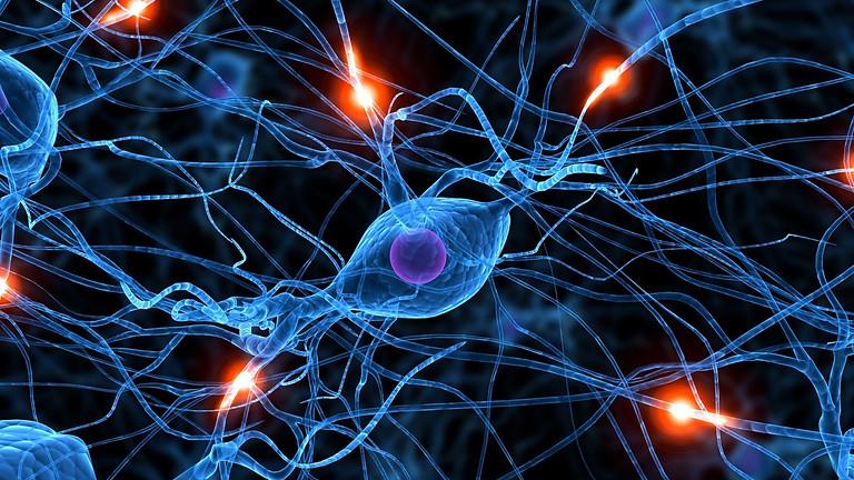 5-Week Program: Neuroscience for Business