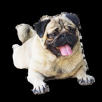 carlin chien