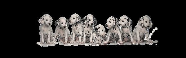 Dalmatien Village Canin des Cévennes
