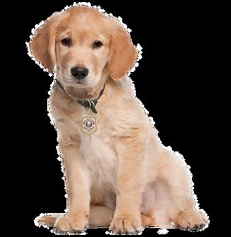 Golden Village Canin des Cévennes