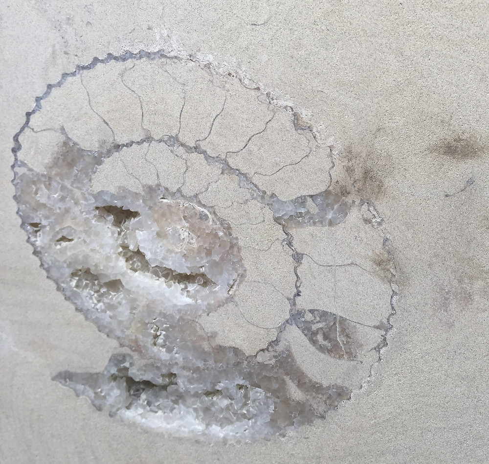 Ammonite in the Purbeck Quarries