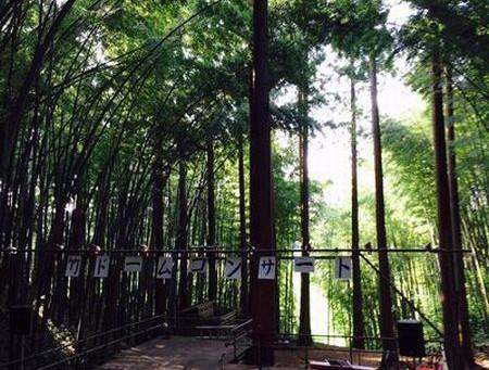 竹ドームコンサートの季節