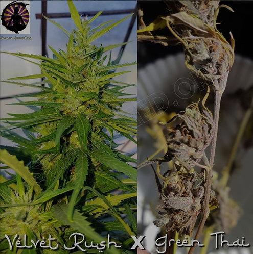 Velvet Rush X Highland Green Thai