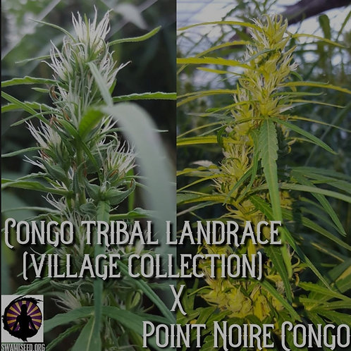 Congo x Point Noire Congo