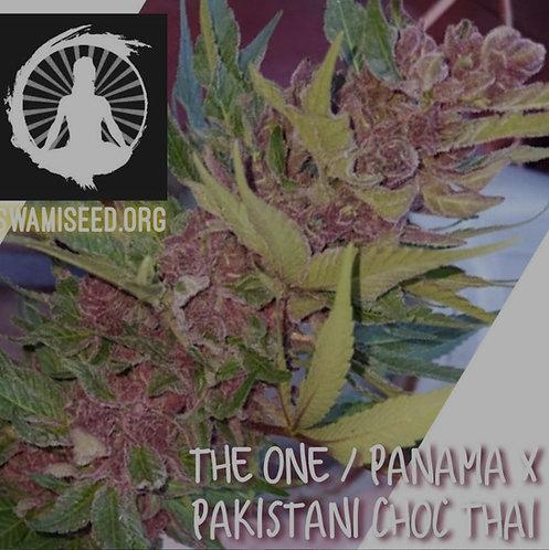 The One/Panama x Pakistani/Chocolate Thai