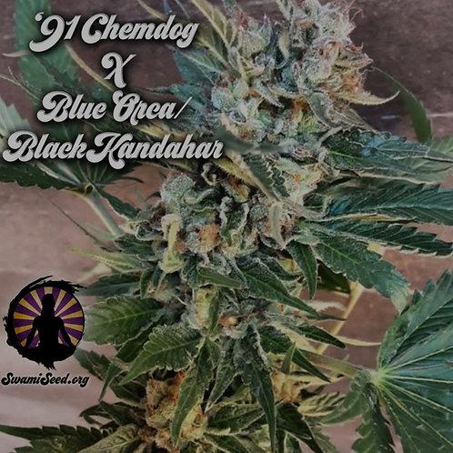 '91 Chemdog x Blue Orca/Black Kandahar Afghanistan