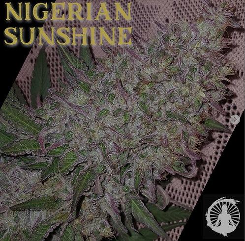 Nigerian Sunshine