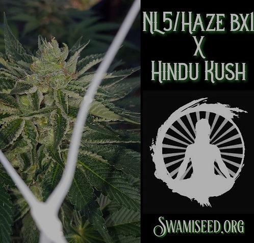 NL#5/Haze Bx1 x Hindu Kush