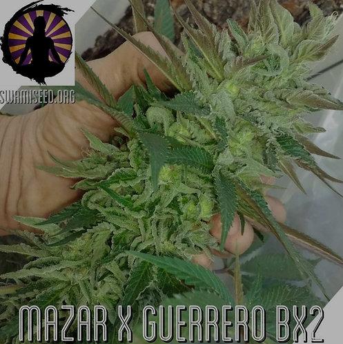 Mazar x Guerrero IBL