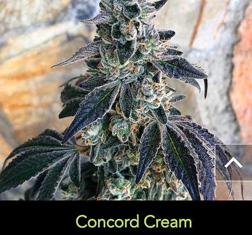 Concord Cream