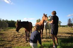 nourrit chevaux.JPG